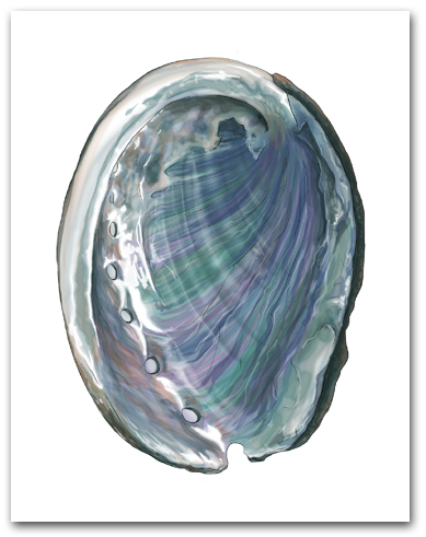 Abalone Interior Nacre Large Vertical Larger