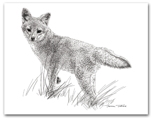 Channel Island Fox Full Body California No Color Larger