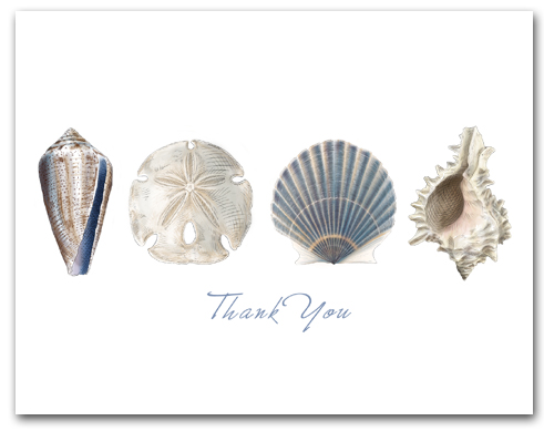 Cone Sand Dollar Scallop Murex Row Thank You Horizontal Larger