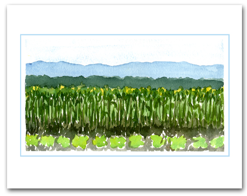 Field Planted Vegetables Crops Mountains Background Large Horizontal Larger