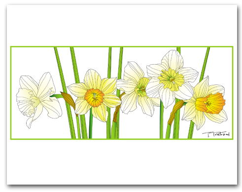 Five Daffodils Row Green Outline Larger