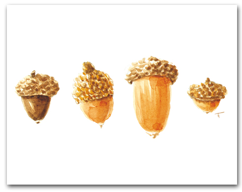 Four Acorns Larger
