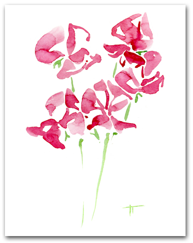 Multiple Pink Sweet Pea Larger