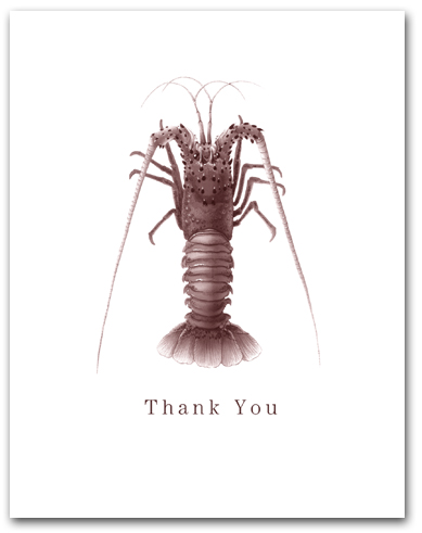 Pacific Spiny Lobster Thank You Larger