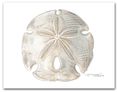 Blue sand dollar illustration - photo#19