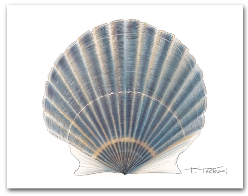 Scallop Blue Large Horizontal Larger