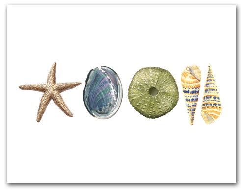 Sea Star Abalone Green Sea Urchin Augers Row Horizontal Larger
