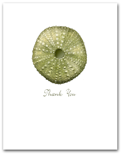 Sea Urchin Green Small Thank You Vertical Larger