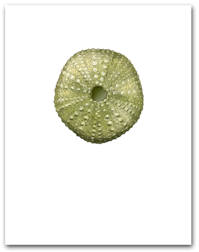 Sea Urchin Green Small Vertical Larger
