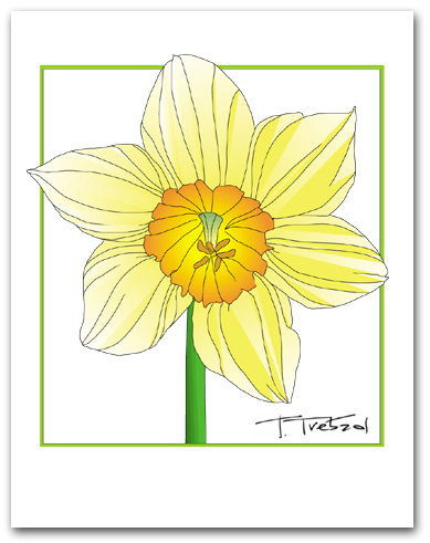 Single Daffodil Flower Yellow Petals Orange Center Square Outline Larger