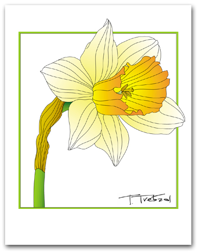 Single Daffodil Yellow Petals Orange Center Square Outline Larger