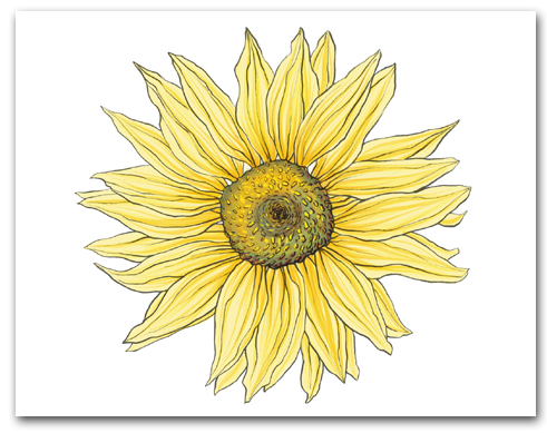 Single Large Yellow Sunflower Larger