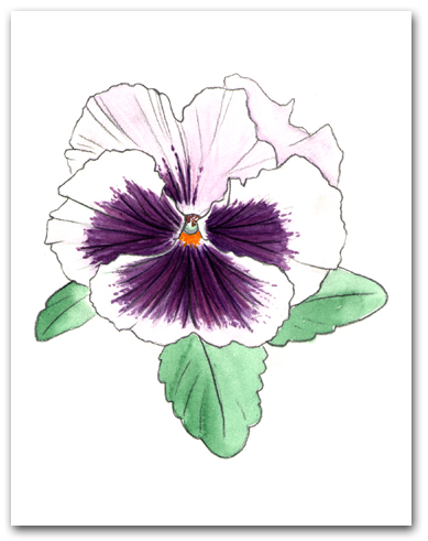 Single White with Purple Face Pansy Larger
