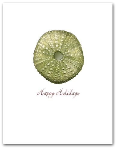 Small Green Sea Urchin Happy Holidays Larger