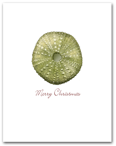 Small Green Sea Urchin Merry Christmas Larger
