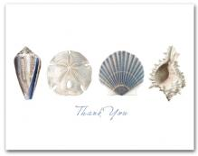 Cone Sand Dollar Scallop Murex Row Thank You Horizontal