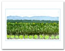 Field Planted Vegetables Crops Mountains Background Large Horizontal