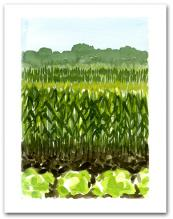 Field Planted Vegetables Crops Mountains Background Large Vertical