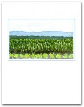 Field Planted Vegetables Crops Mountains Background Small Vertical