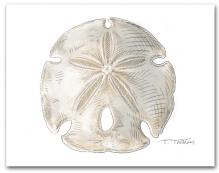 Sand Dollar Large Horizontal