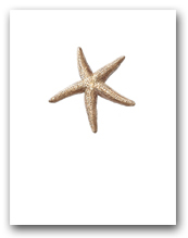 Sea Star Small Vertical