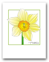 Single Daffodil Flower Yellow Petals Orange Center Square Outline