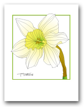 Single Daffodil White Petals Yellow Center Square Outline