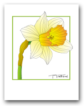 Single Daffodil Yellow Petals Orange Center Square Outline