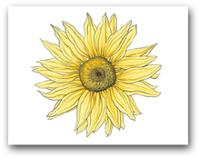 Single Large Yellow Sunflower
