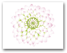 Single Light Pink Dahlia Green Center