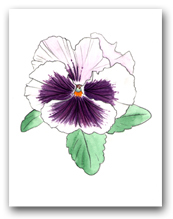 Single White with Purple Face Pansy