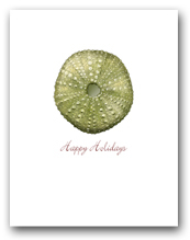 Small Green Sea Urchin Happy Holidays